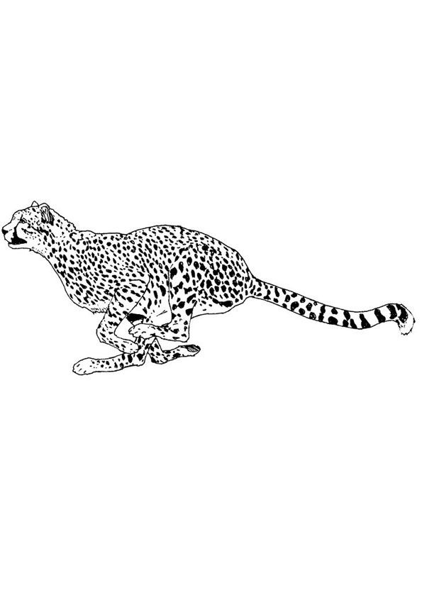Running Cheetah Coloring Page Coloring Pages Free Printable Coloring Pages Free Printable Coloring