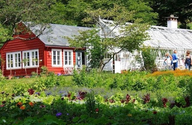 Herb garden. Rosendal, Hardanger.