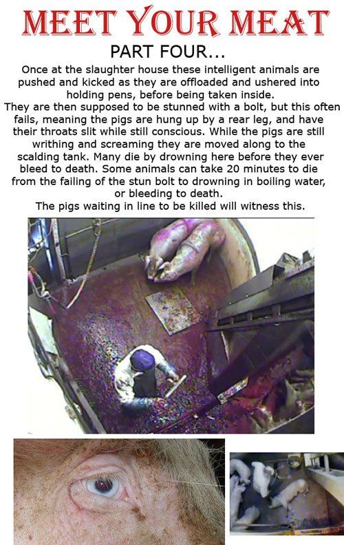 I felt sick to my stomach when I read this and saw all the photos. Gets me every time.