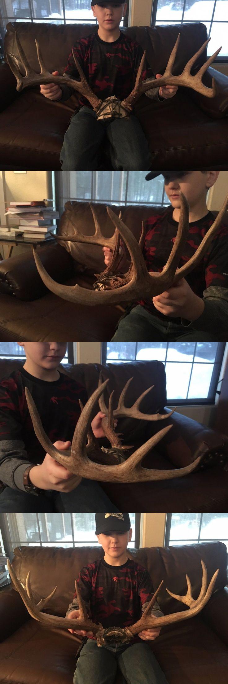 Other Taxidermy 22702: Nice 5X6 Whitetail Deer Antlers Horns Set Sheds Antler Muledeer Mule -> BUY IT NOW ONLY: $110.95 on eBay!