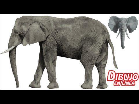 como dibujar un elefante realista (explicado)