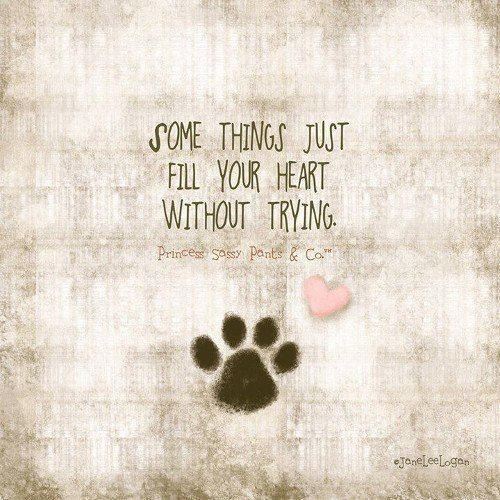 amazing quote about pets #dogquotes