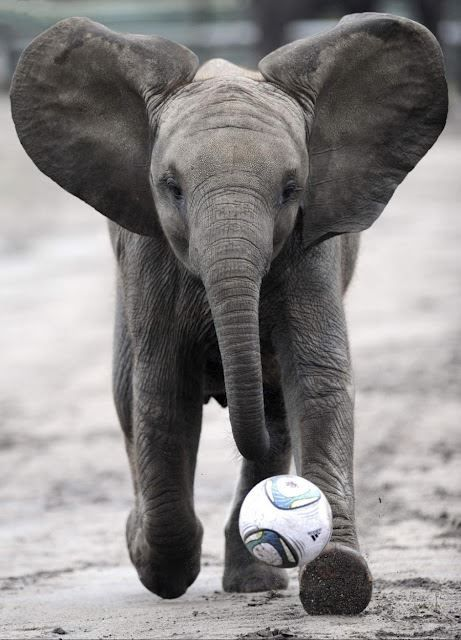 Happy soccer playing elephant!