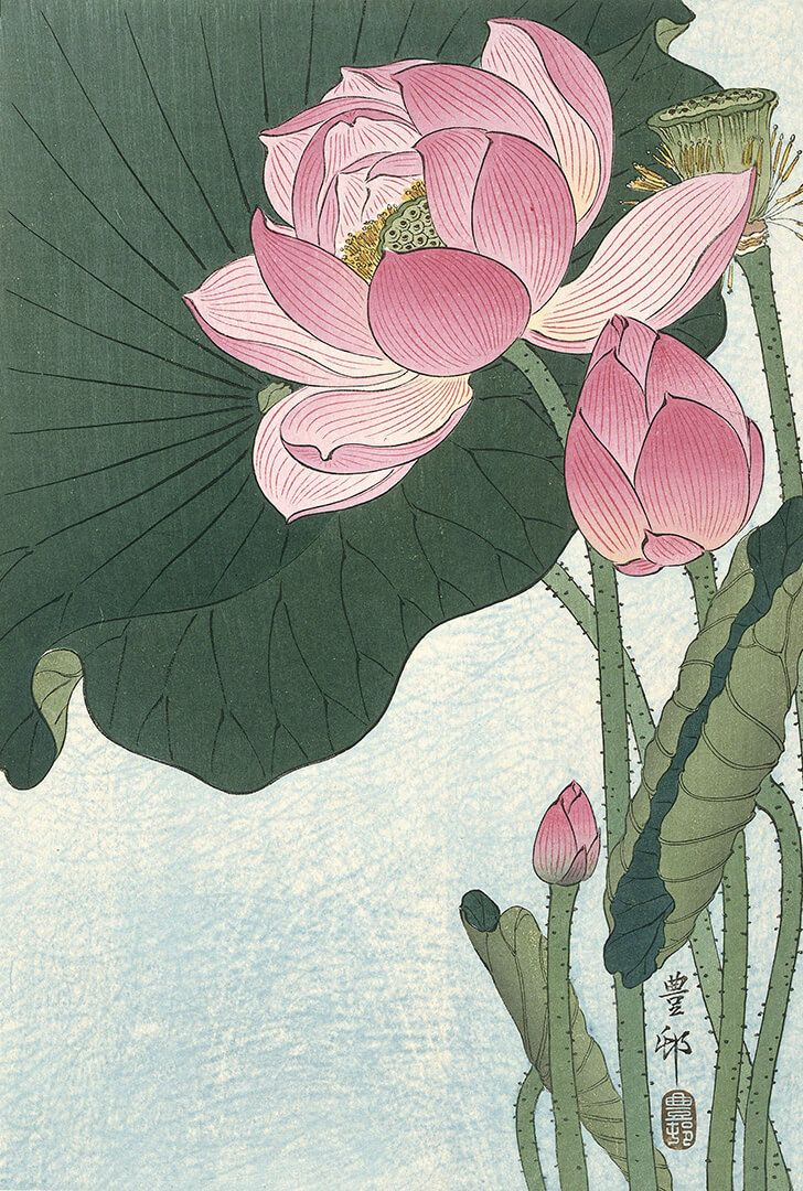 Blooming Lotus Flowers 1920 1930 By Ohara Koson Printed With
