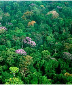 Bosque lluvioso en Panamá
