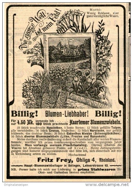 Perfect Original Werbung Inserat Anzeige HAARLEMER BLUMENZWIEBELN FRITZ FREY OHLIGS
