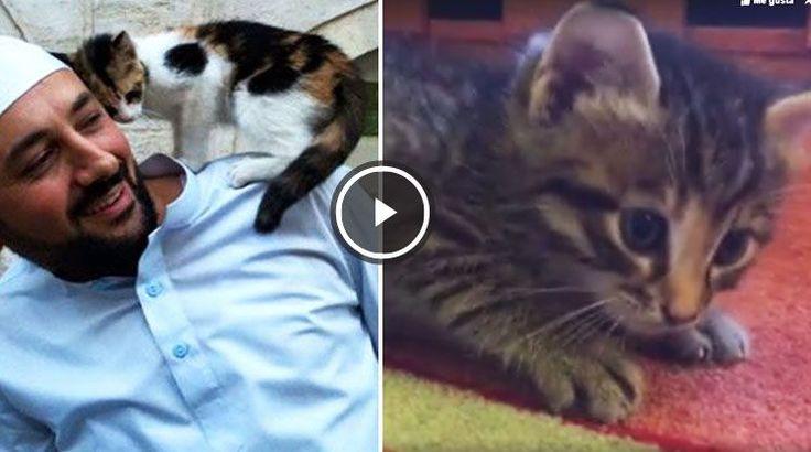 iIman Catlover Abre su Mezquita a Gatos Callejeros en Estambul - PetDarling man abre mezquita a gatos callejeros