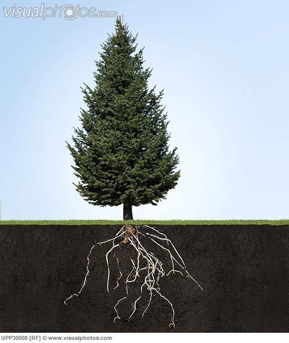 http://www.visualphotos.com/photo/2x4340761/tree_with_underground_roots_UPP30008.jpg