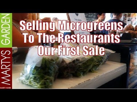 Selling Microgreens to the Restaurants Our First Sale - YouTube