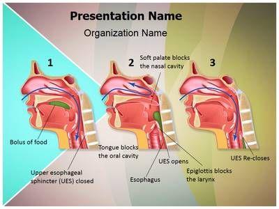 stages of oral presentation
