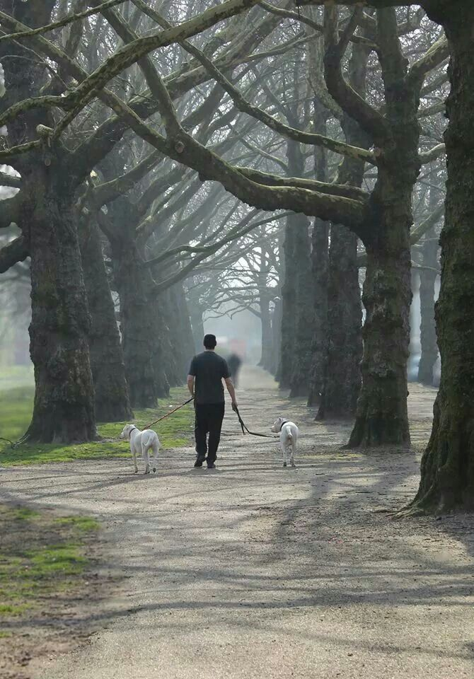 A man walking his two dogs