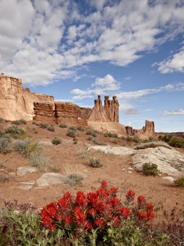 The Three Gossips and Common Paintbrush (Castilleja Chromosa), Arches National Park, Utah, USA