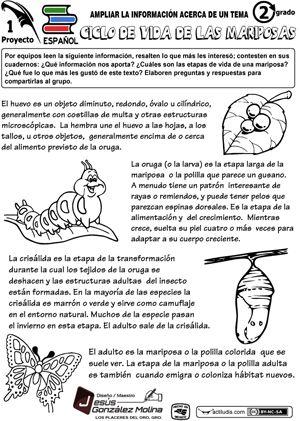 Lecturas para ampliar información: Animals, Actividades Educativas, Spanish, Butterflies, Idea Photo, Actividades Escolares, Activities