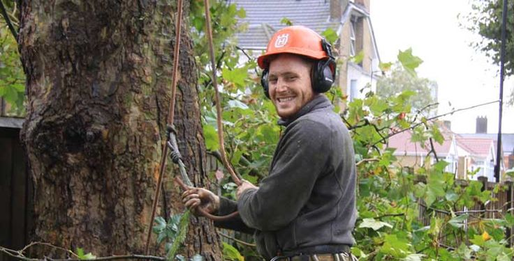 #Tree #Surgery #Enfield - Tree surgeons Keith Archer Tree Care provide tree surgery, tree felling, stump grinding and pruning throughout North London.  Established tree surgeons serving Enfield, Barnet, Tottenham, Finchley, Southgate