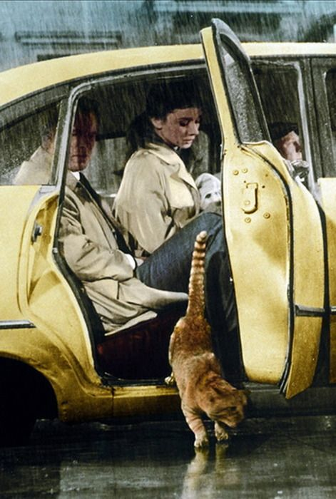 The cat, the rain... and Audrey.
