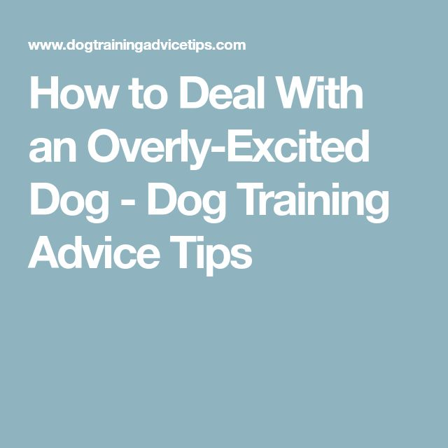 How to Deal With an Overly-Excited Dog - Dog Training Advice Tips