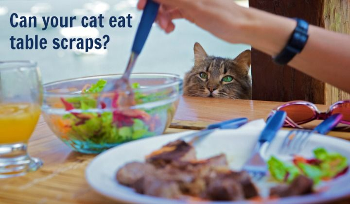 http://slimkitty.com/what-human-foods-can-your-cat-eat/