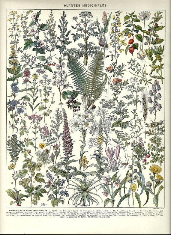 Healing MEDICINAL PLANTS Herbs - Vintage French Dictionary Poster Page - 1930. $19.00, via Etsy.