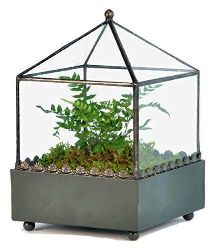 h potter square glass plant terrarium container