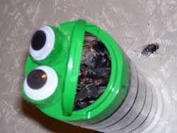 Frog sans  the plastic flies...