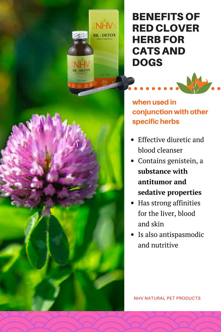 Cancer herbs for dogs - Bk Detox For Dogs