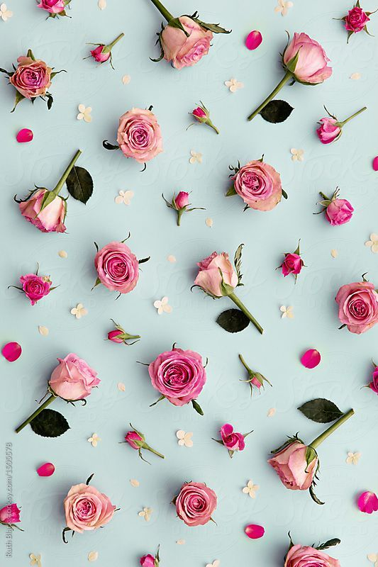 Rose background by Ruth Black - Flower, Rose - Stocksy United