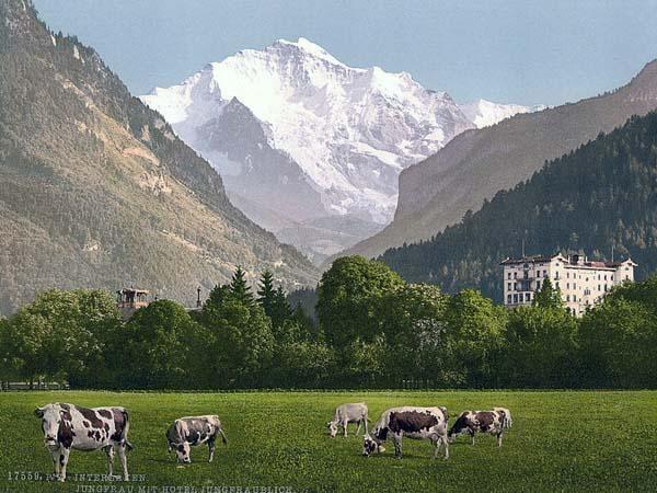 Historic Color Print Of Jungfrau And Jungfraublick Hotel Bernese In Switzerland