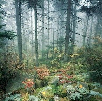 Taiga (/ˈtaɪɡə/; Russian: тайга́, IPA: [tɐjˈɡa]; from Turkic or Mongolian), also known as boreal forest, is a biome characterized by coniferous forests consisting mostly of pines, spruces and larches.