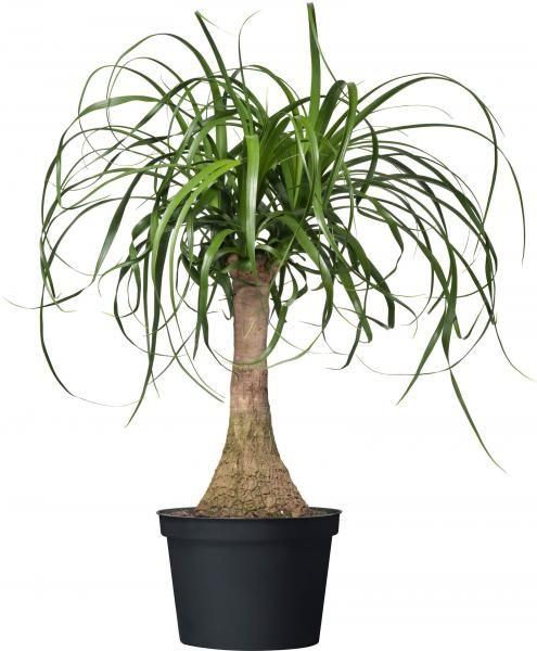 Les 25 Meilleures Id Es Concernant Arbuste En Pot Sur Pinterest Plantes Feuillage Arbuste A