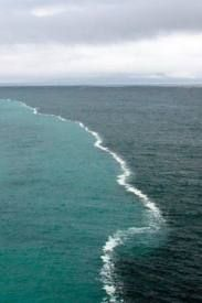 Gulf of Alaska - where two oceans meet, but never mix..