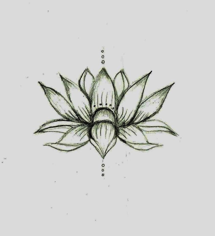 this lotus flower sketch ideas