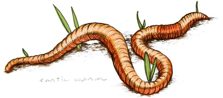 Lisel Jane Ashlock - Day In The Life Of A Worm | Moomah the Magazine