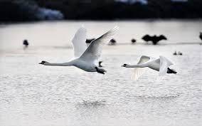 Πρέβεζα: Μέτρα Βιοασφάλειας Και Στην Ηπειρο Για Τη Γρίπη Των Πτηνών