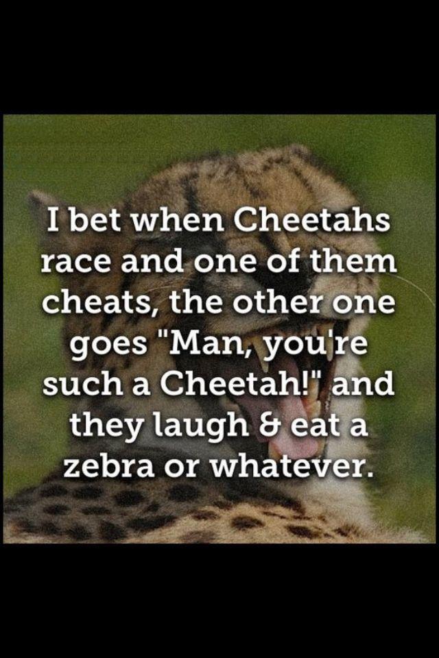 Funny cheetah   Haha funny
