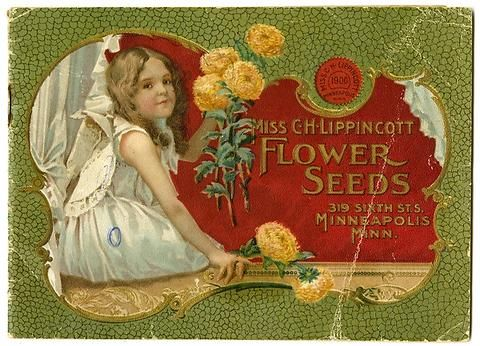 "A young girl holds New Comet asters on the cover of the Carrie Lippincott 1900 catalog.  Carrie Lippincott, the self-proclaimed ""pioneer seedswoman"" and ""first woman in the flower seed industry"" established her mail-order flower seed business in Minneapolis in 1891. She cultivated women customers by sending out smaller 5 inch by 7 inch catalogs with colorful covers during her early years of business."
