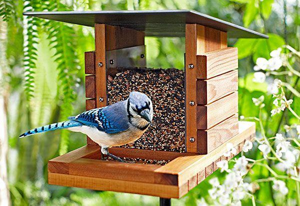 DIY bird feeder - We'd love to watch pretty birds in our backyard