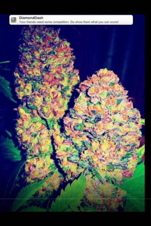 17 Best images about Mary jane on Pinterest | Bud, Glass ...