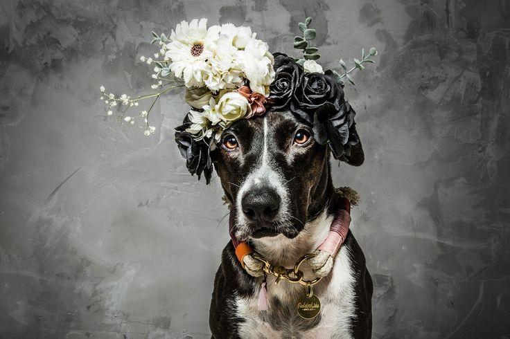 Let your dreams blossom // www.rudelliebe.de   #hund #frenchbulldog #dog #dogs #halsband #dogsofinstagram #goldenretriever #instadog #dogstagram #dogoftheday #dogs_of_instagram #retriever #labrador #dobermann #instapets #puppy #bestwoof #flowerchild #hundehalsband #labrador #hippie #pitbullmix #mops #pets_of_instagram #irishsetter #australianshepherd #beagle #französischebulldogge #dalmatiner #dackel #pitbull