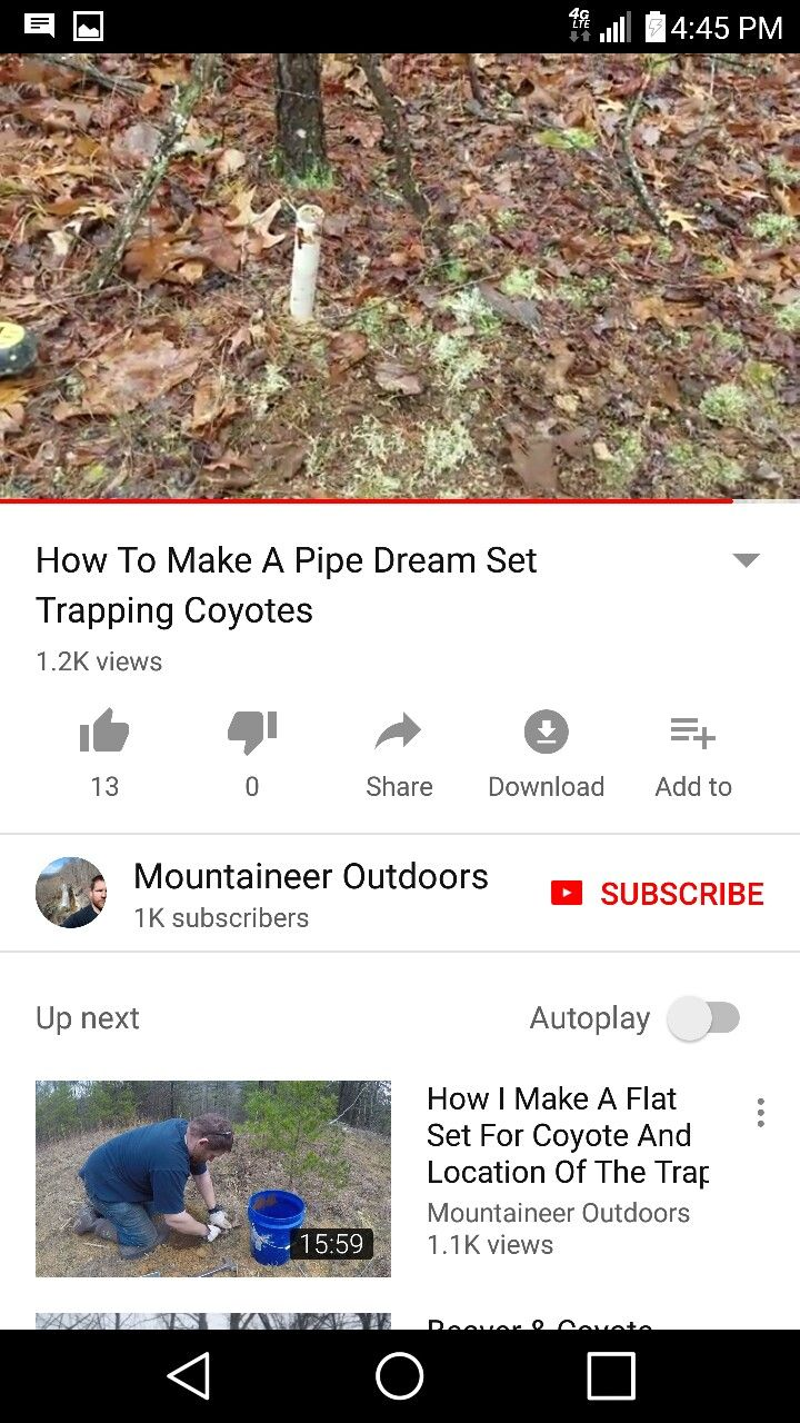 Coyote Pipe Set Trapping Pinterest Coyote Hunting Coyote
