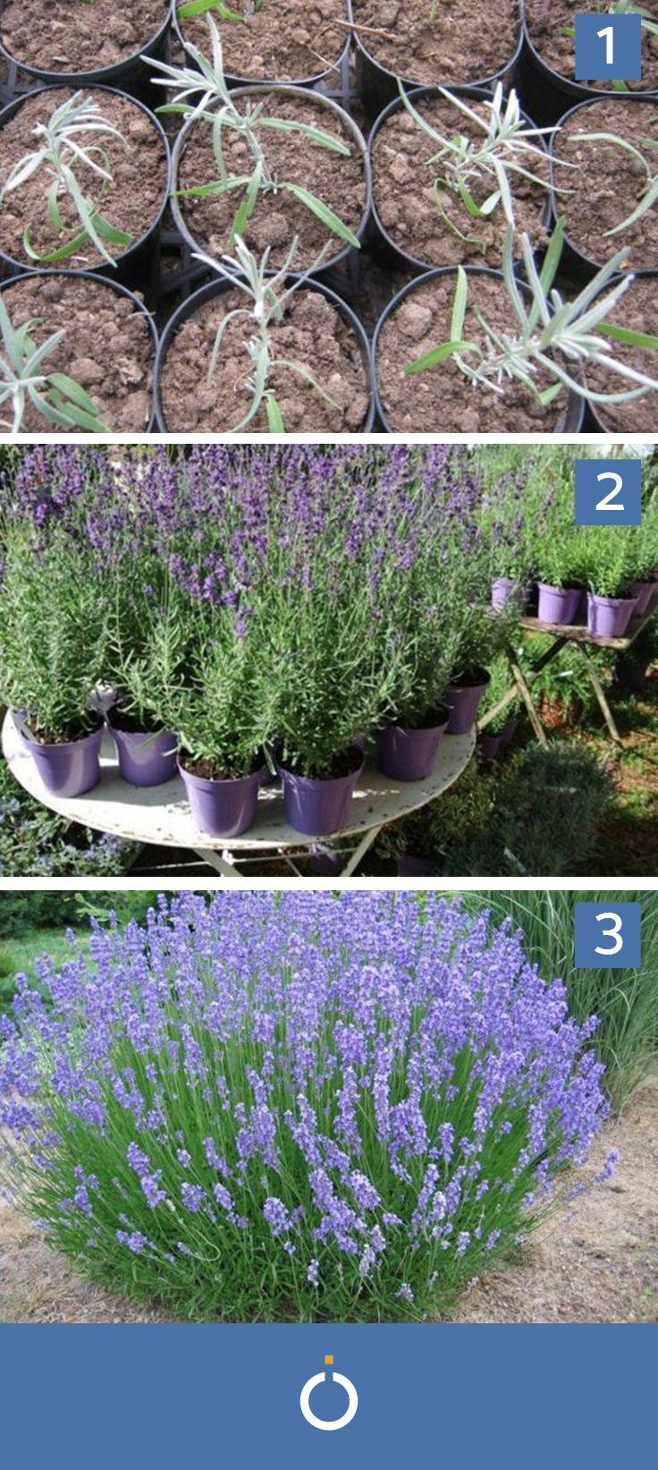 oltre 25 fantastiche idee su piantare un giardino su