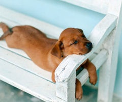 doggy rest! Just a cutie from pinterest......