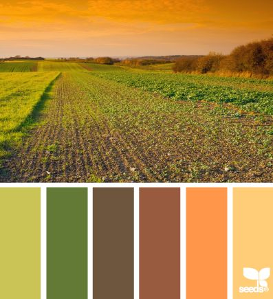 harvest hues