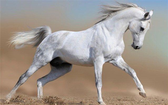 لماذا يموت الحصان اذا قطع ذيله إنها حقيقة علمية فعلا حيث ان الحصان فعليا وبعد العديد من المباحثا Animales Locos Fotos De Animales Fondo De Pantalla De Caballo