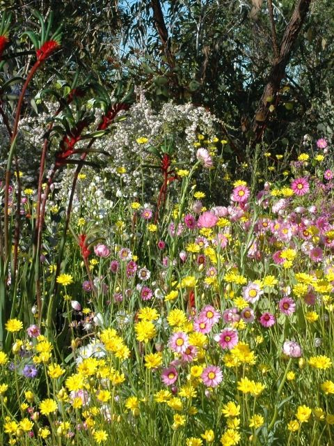 Visit the Botanic Garden at Kings Park and discover an outstanding collection of Western Australia flora! #celebratewa