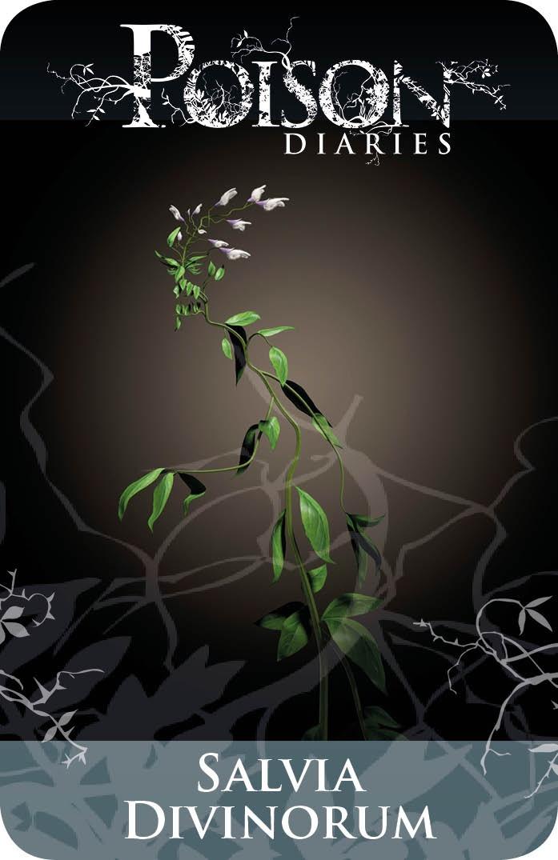 Poisonous Plants:  #Salvia #Divinorum.
