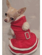 Mrs Holiday Helper Dog Costume   Chihuahua and Small Dog Holiday Dresses   Marilyn Muttroe$26.99: Holidays Santa, Dogs Stuff, Dogs Costumes, Dogs Style, Holidays Helpers, Holidays Dresses, Dogs Holidays, Helpers Dogs, Holidays Photos