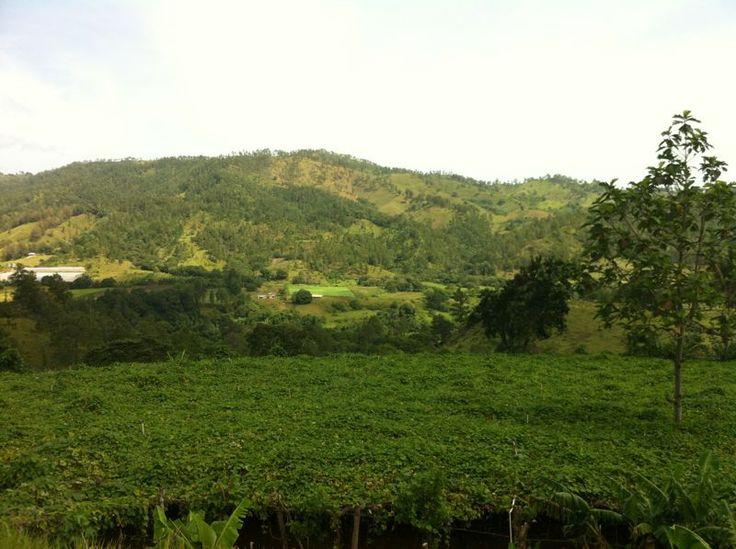 op excursie naar Jarabacoa, 1997 1e x in Dominicaans Repupubliek. Wat een land , de muziek, de mensen.....