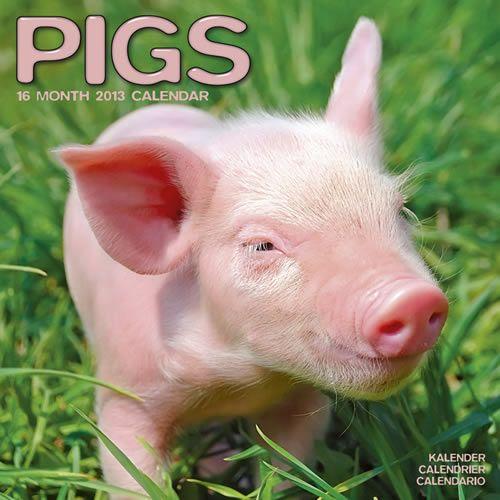 Pigs 2013 Calendar 30115-13