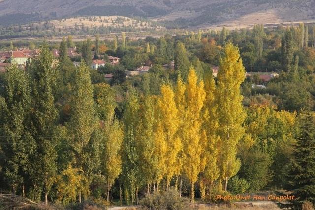 Nature in Eregli, Turkey (nature konya) - a photo by umithan
