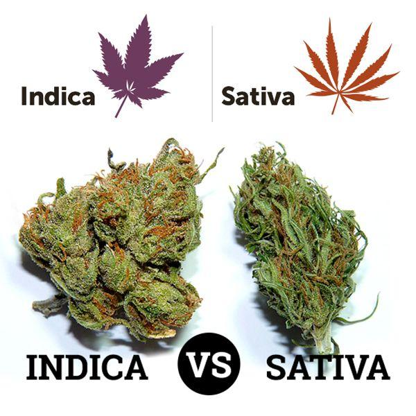 Rzecz o marihuanie - http://www.augustynski.eu/rzecz-o-marihuanie/
